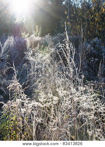 First Winter Frost In The Country
