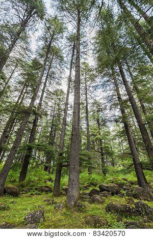 Beautiful Forest, Manali