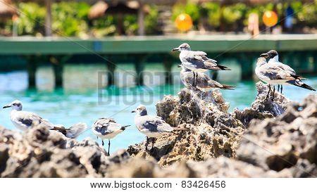 Seagulls Portrait
