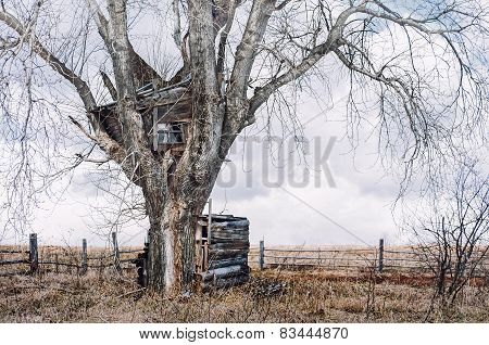 The Tree House In Old Russia