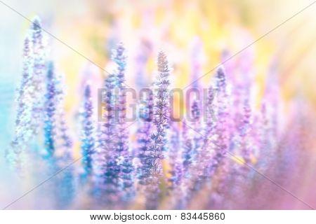 Soft focus on purple flowers