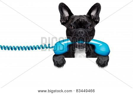 Dog Phone Telephone