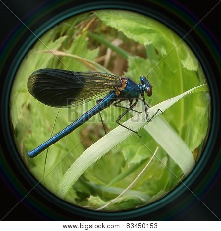 Blue Dragonfly On Leaf In Objective Lens
