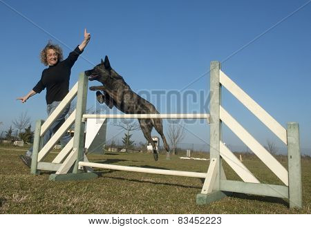 Jumping Dutch Shepherd Dog