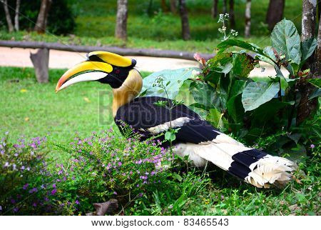 Great Hornbill Stand On The Branch In Forest