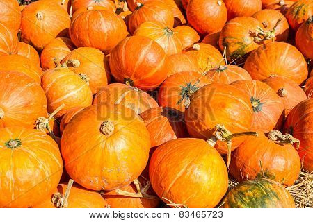 Small Pumpkins.