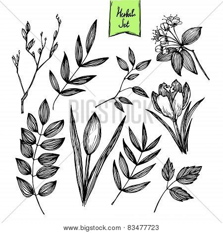 Hand-drawn Vector Illustration - Set Of Leaves And Flowers. Ink And Feather. Isolated On White Backg