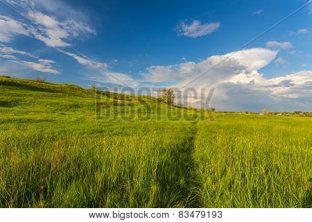 field on a background of the sky