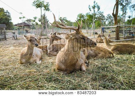 Sleeping Deers