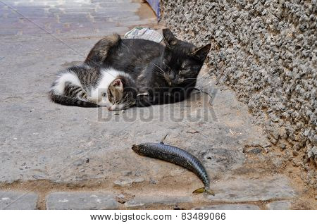 Older And Younger Cat On The Street With A Fish