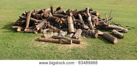 Tree Logs.