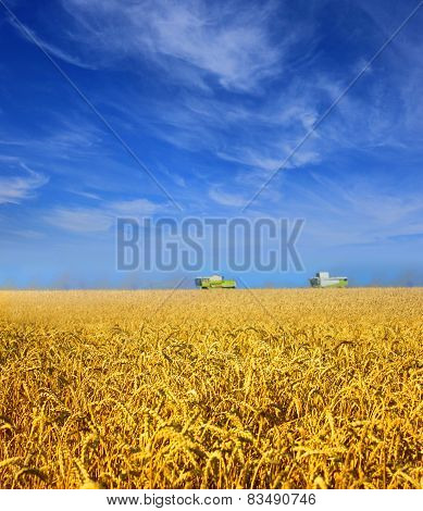 Modern combines work in a wheat field