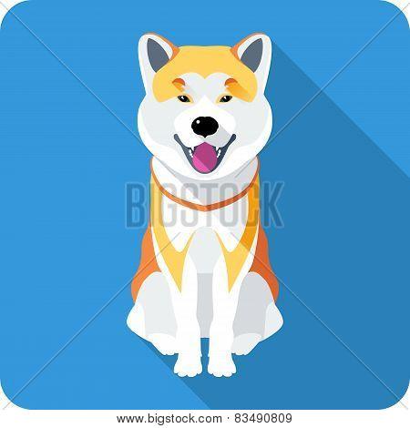 dog Akita Inu Japanese breed icon flat design
