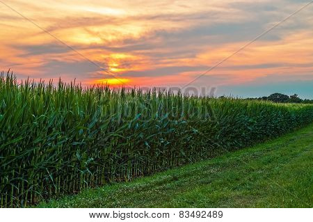 Sunset Over Cornfield