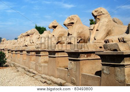Avenue of sphinxes in Precinct of Amun-Re  (Karnak Temple Complex, Luxor, Egypt)