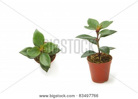 House Plant Potted Plant Front View And Top View