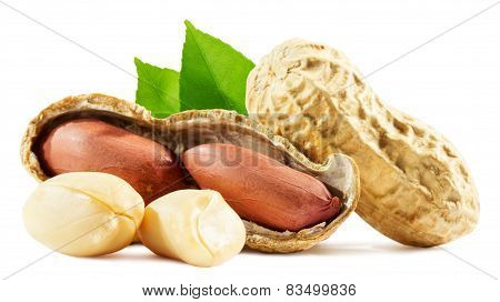 Peanuts Isolated On The White Background