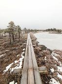 image of frostbite  - wooden boardwalk in frosty winter bog landscape with frozen nature - JPG