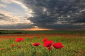 picture of neglect  - Dramatic clouds over the neglected agricultural land with poppy flowers in the foreground - JPG