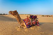 stock photo of camel  - Camels in Thar desert Jaisalmer city in Rajasthan state of India - JPG