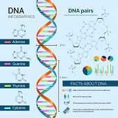 Постер, плакат: Dna Infographics Set