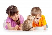 pic of child feeding  - happy kids boy and girl feed cat kitten
