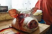 stock photo of pig head  - fresh head of death pig  - JPG