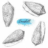 stock photo of beach shell art  - Beauty set of various sea shells vector - JPG