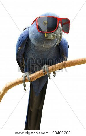 Funny hipster parrot wearing cool red sunglasses