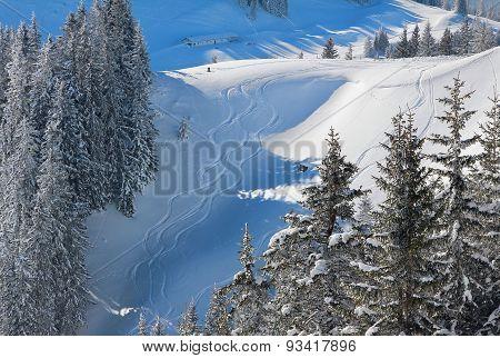 Freeride Tracks In Powder Snow, Bavarian Alps