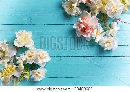 Background With Fresh Daffodils And Willow Flowers