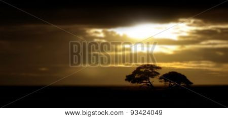 Golden dusk on the African savanna