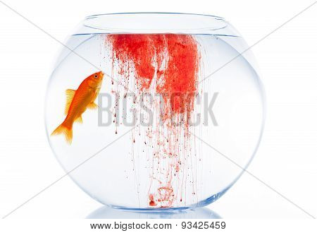 Goldfish in unhealthy water