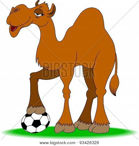 Camel And Ball