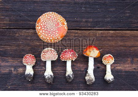 Mushroms Toadstools Amanita Muscaria On Table