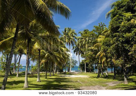 Beach on the tropical island. Clear blue water, sand and palm trees in Tahiti