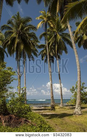 Beach on the tropical island. Clear blue water, sand and palm trees in Tahiti.