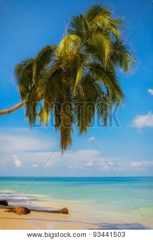 View Of A Tropical Beach Scene