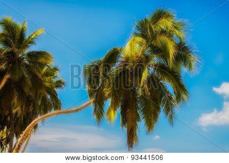 Closeup Palm Trees In Playa Blanca