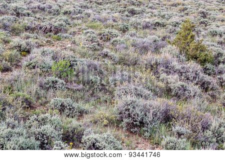 sagebrush, wildflowers and other shrubs - North Park of Colorado in early summer