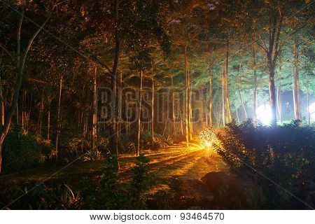 Park with mystical light at night