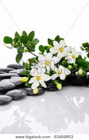 gardenia with n black pebbles