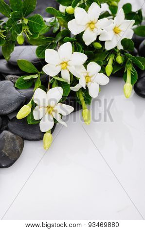 Lying down gardenia with green plant on black pebbles