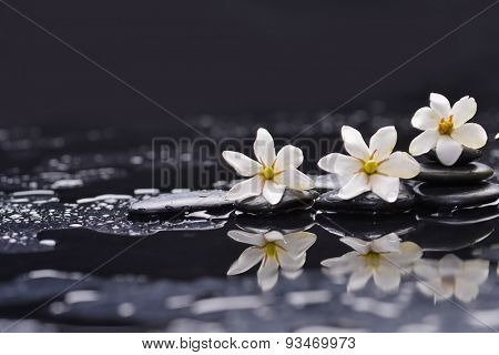 Still life with three gardenia on black pebbles
