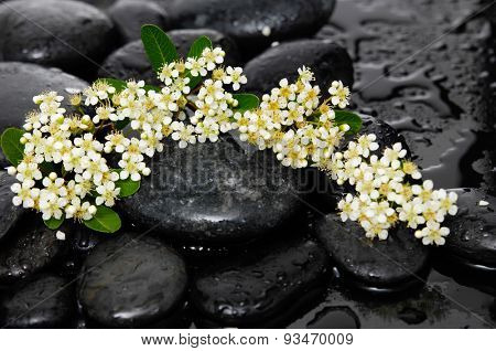 Lying down tropical flower with wet therapy stones