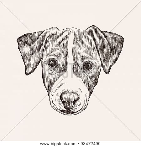 Sketch Jack Russell Terrier Dog. Hand Drawn Face Illustration.
