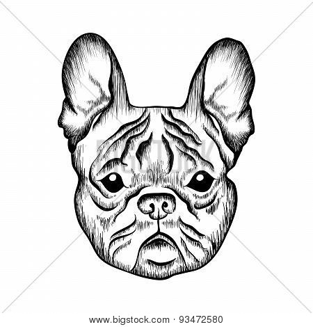 Sketch French Bulldog. Hand Drawn Illustration.