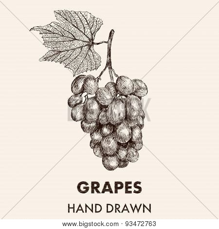 Sketch  Grapes Cluster With A Leaf. Hand Drawn Vector Illustration. Fruit Collection.