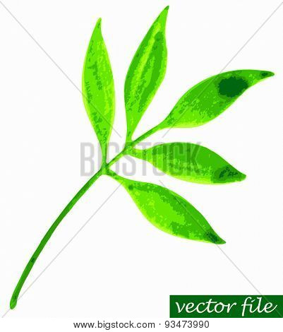 Green leaves watercolor vector