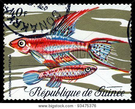 Vintage  Postage Stamp. Fish Aphyosemion Bivittatum.